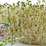 A lucerna több, mint egyszerű takarmánynövény